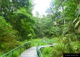 Walkway through the swamp at La Selva Biological Research Station, Costa Rica